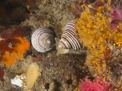 Top Snails Deception Pass.jpg